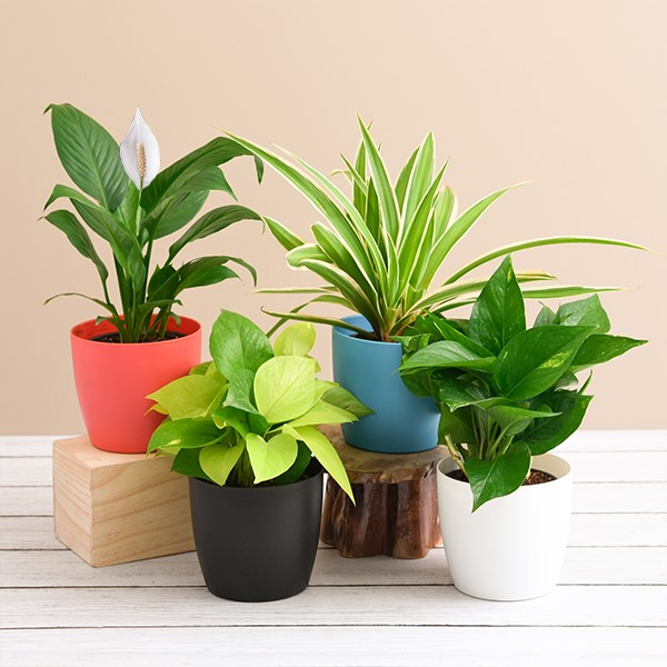 Secret Santa gift ideas in your Budget plant set